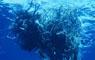 """Científicos desmienten existencia de """"isla de plástico"""" en el mar"""