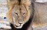 Dos zimbabuenses comparecen ante la justicia por cacería y muerte del león Cecil