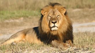 Zimbabue pide la extradición del cazador estadounidense que mató al león Cecil