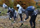 Con éxito concluyó voluntariado en Aysén de Reforestemos Patagonia